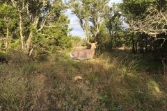 The Deer Wind Drifter Decoy