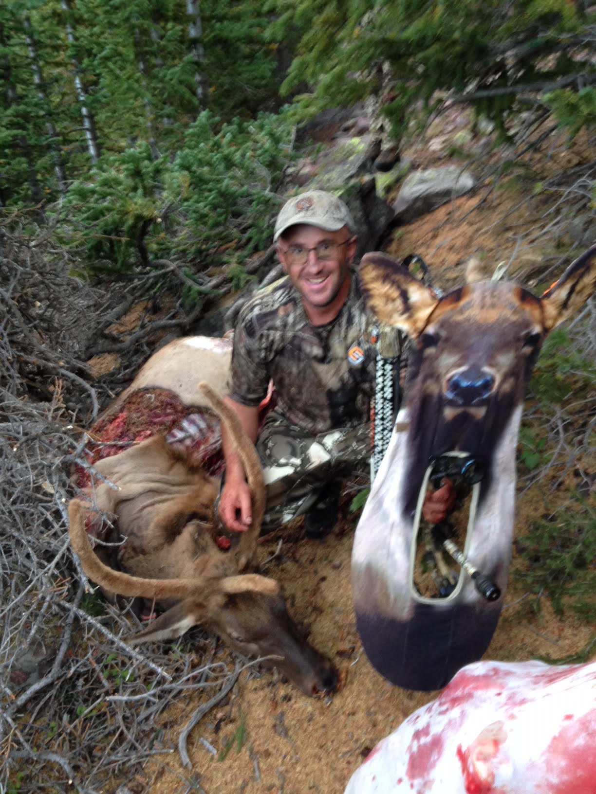 Elk Gunnison UT