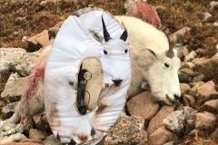 mountain-goat-2-1024x1024