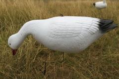 Snow Geese Wind Drifter