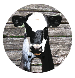 cow-stalker-home-circle