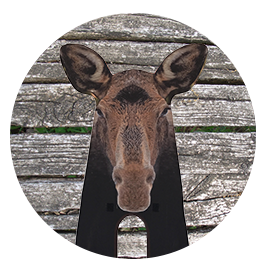 moose-stalker-hom-circle