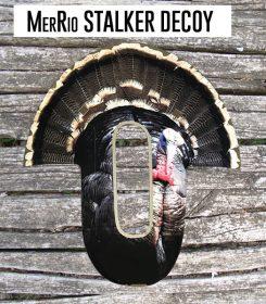 MerRio-stalker-img2