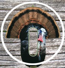 turkey-circle