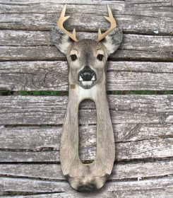 whitetail-buck-stalker-img